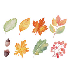 watercolor autumn fall leaves elements collection vector image