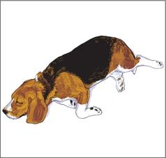 Beagle2 vector