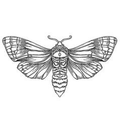 black and white decorative vector image
