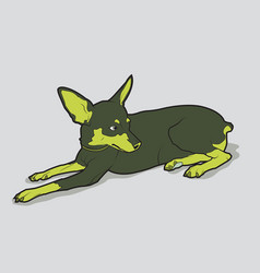 Cute dog of breed chihuahua vector