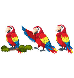set parrot character vector image