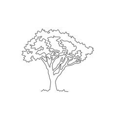 single continuous line drawing beautiful marula vector image