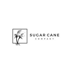 Sugar cane logo icon vector