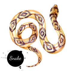 watercolor snake painted isolated halloween vector image
