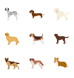 dalmatian dachshund poodle and other web icon vector image vector image