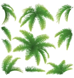 Branches palm trees vector