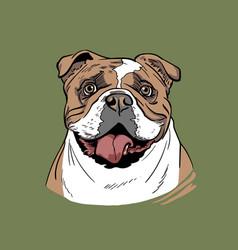 bulldog portrait cartoon style vector image