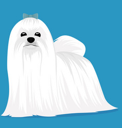 Maltese dog cartoon vector