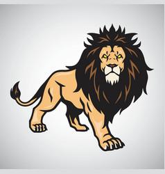 Wild lion standing vector