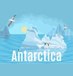 Antarctica penguins and albatrosses on icebergs vector