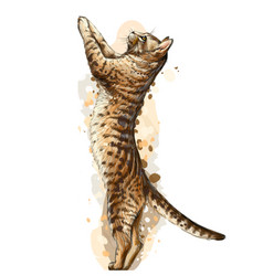 cat wall sticker graphic color hand-drawn sketch vector image