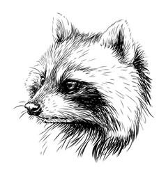 raccoon sketchy graphic portrait a raccoon vector image
