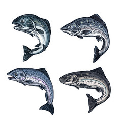 salmon sketch fish fishing catch icon vector image