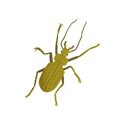 Top view ground beetle with horns long legs vector