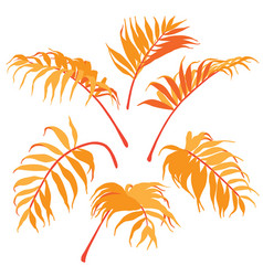 palm leaves isolated vector image vector image