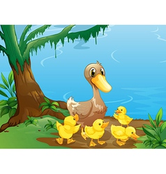 A duck and her ducklings at the riverbank vector image vector image