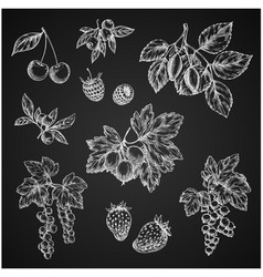 Chalk sketch icons of berries fruits vector