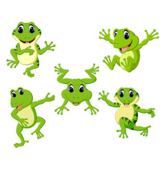 Collection of the beautiful green frog vector