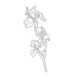 Drawing flower vector