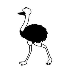 emu fauna on white background vector image
