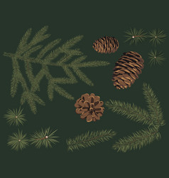 Set of green fir branch and pine cone conifers vector