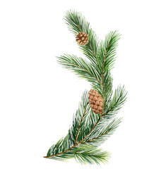 Watercolor green spruce branch christmas vector