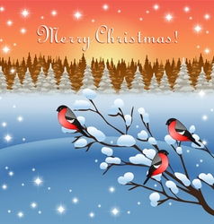 Bullfinches and winter vector image vector image