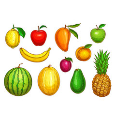 Isolated icons of tropical exotic fruits vector