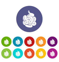 Small intestine icons set color vector