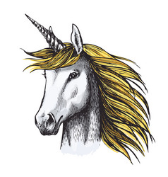 Unicorn horse sketch of fairy or heraldic animal vector