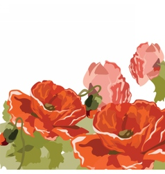 Vintage Watercolor poppy flower vector image