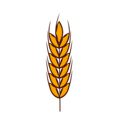 wheat spike isolated icon vector image
