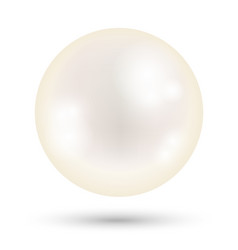 a white bright pearl on a white background vector image