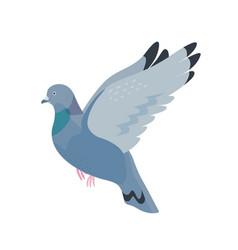 gray pigeon flat fauna vector image