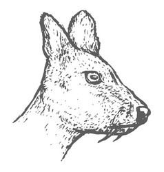 hand drawn musk deer head sketch vector image