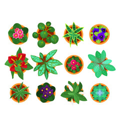 Home plant top view set houseplants for vector