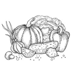 Vegetables engraving style vector