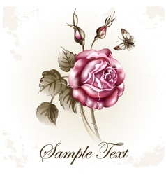 Rose flower and butterfly vector image vector image