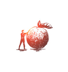 apple food fruit fresh organic concept hand vector image