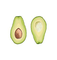 Fruit avocado avocado cut in half with a stone vector