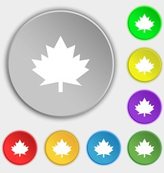 Maple leaf icon Symbols on eight flat buttons vector image