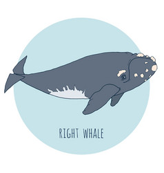 Right whale isolated on blue vector