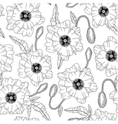 seamless pattern with poppies flowers on white vector image