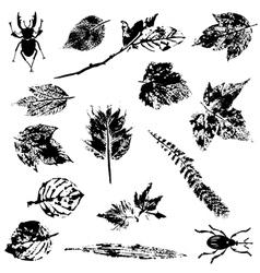 set nature grunge elements vector image