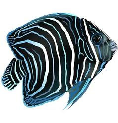 Angelfish vector image vector image
