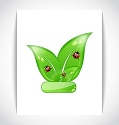 Green eco leaves with ladybugs on the white paper vector image vector image