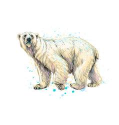 Abstract polar bear from a splash of watercolor vector