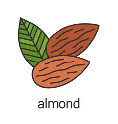 Almond color icon vector