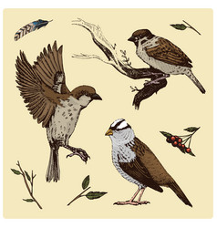 Birds fly in air sparrow and feather vector