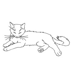Cute realistic cat laying of vector